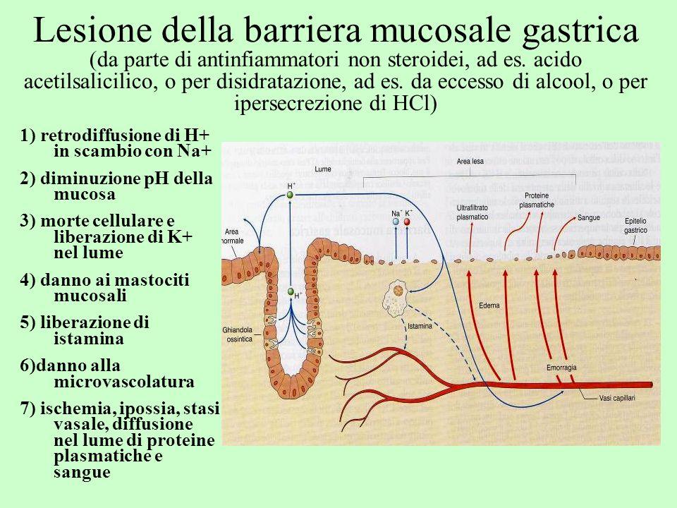 Lesione della barriera mucosale gastrica (da parte di antinfiammatori non steroidei, ad es. acido acetilsalicilico, o per disidratazione, ad es. da eccesso di alcool, o per ipersecrezione di HCl)