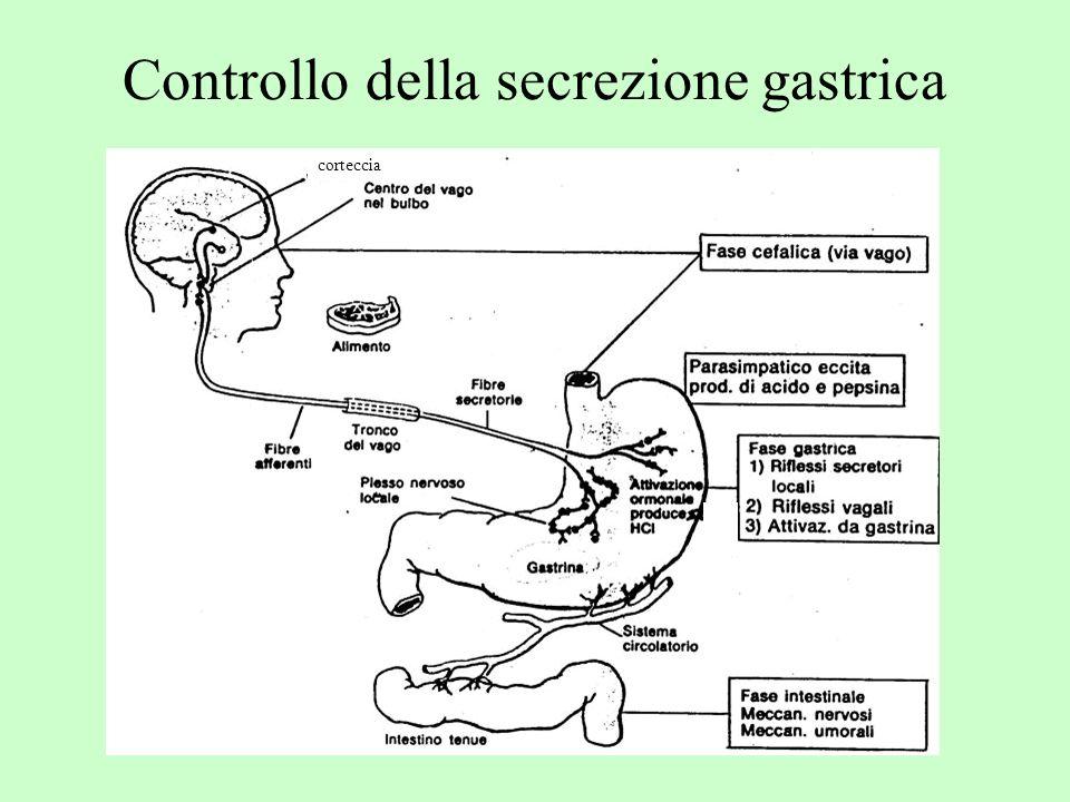 Controllo della secrezione gastrica
