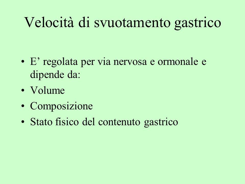 Velocità di svuotamento gastrico