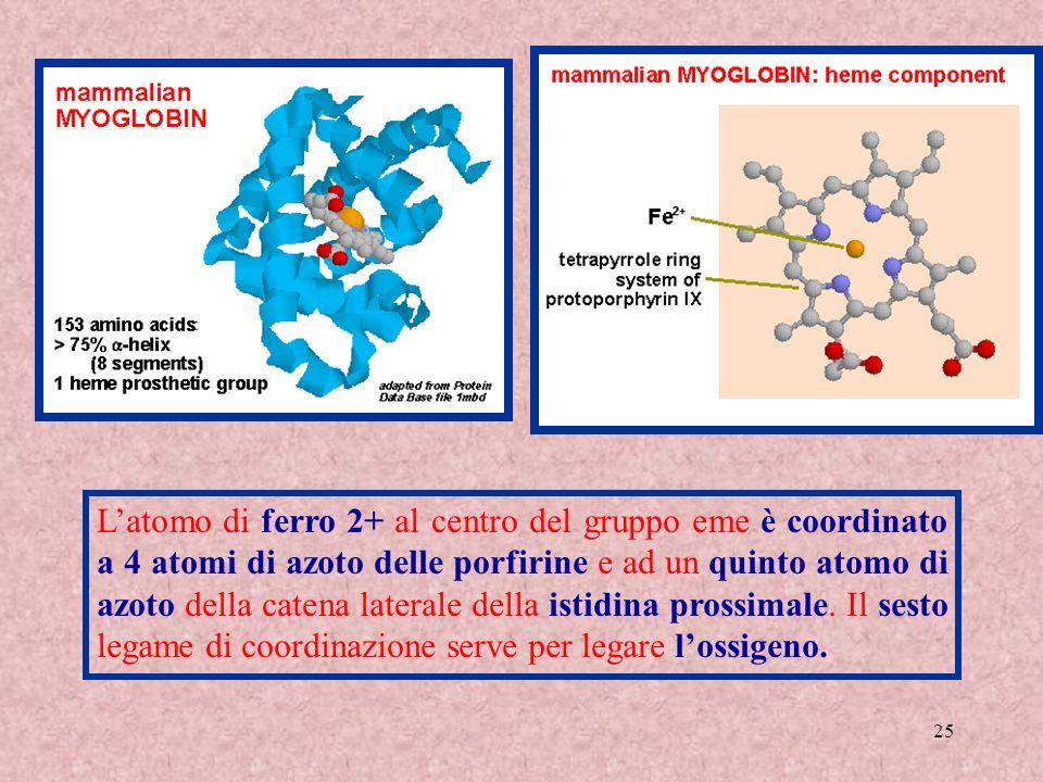 L'atomo di ferro 2+ al centro del gruppo eme è coordinato a 4 atomi di azoto delle porfirine e ad un quinto atomo di azoto della catena laterale della istidina prossimale.