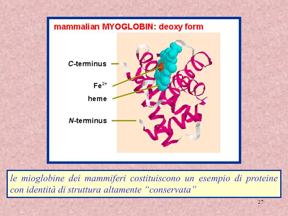 le mioglobine dei mammiferi costituiscono un esempio di proteine con identità di struttura altamente conservata