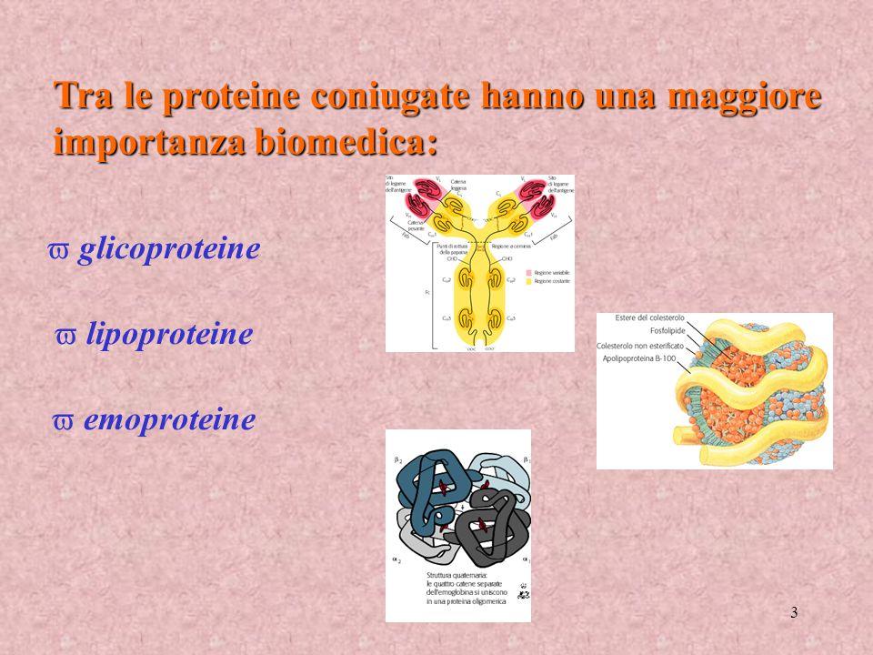 Tra le proteine coniugate hanno una maggiore importanza biomedica: