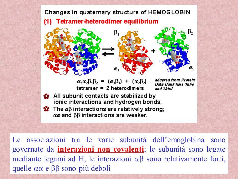 Le associazioni tra le varie subunità dell'emoglobina sono governate da interazioni non covalenti; le subunità sono legate mediante legami ad H, le interazioni ab sono relativamente forti, quelle aa e bb sono più deboli