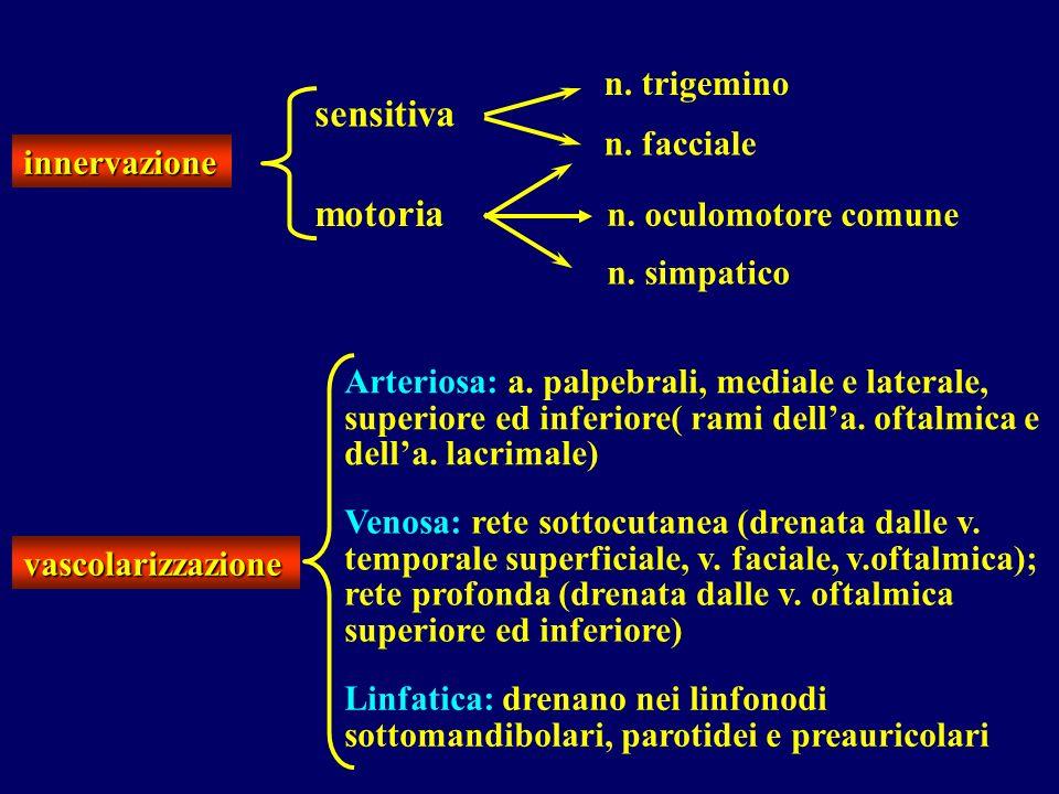 sensitiva motoria n. trigemino n. facciale innervazione