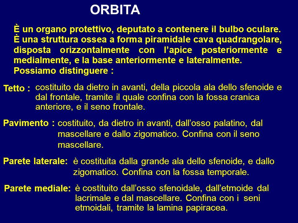 ORBITA È un organo protettivo, deputato a contenere il bulbo oculare.