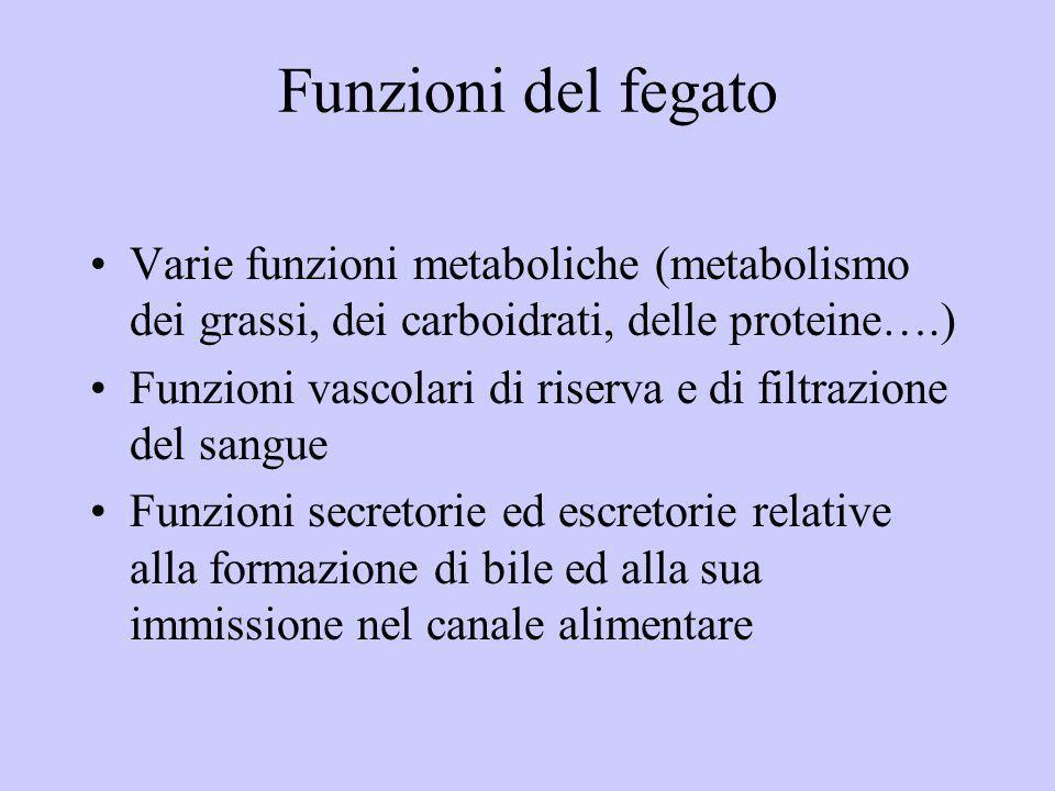 Funzioni del fegato Varie funzioni metaboliche (metabolismo dei grassi, dei carboidrati, delle proteine….)
