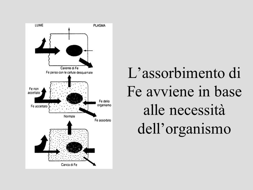 L'assorbimento di Fe avviene in base alle necessità dell'organismo