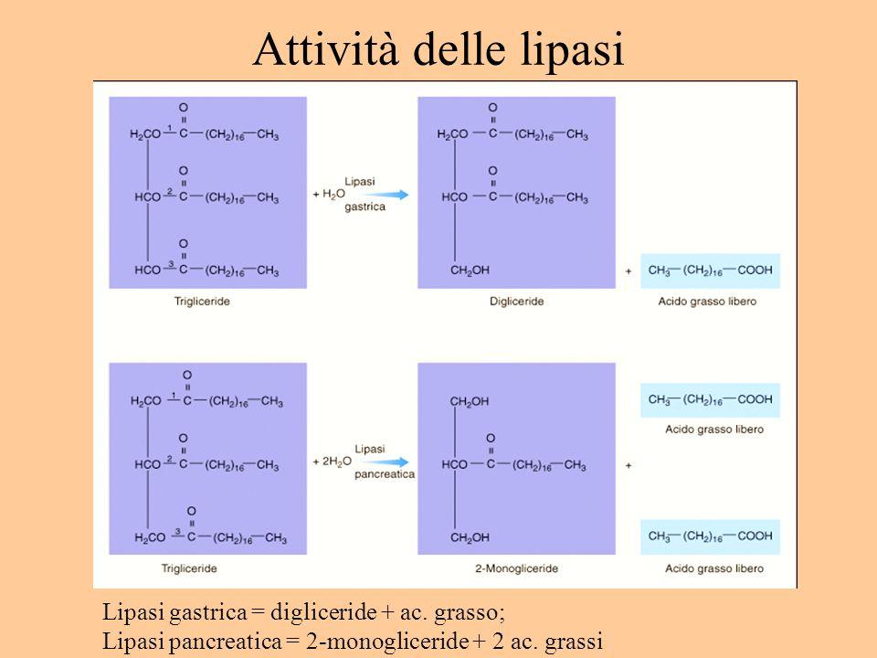 Attività delle lipasi Lipasi gastrica = digliceride + ac. grasso;