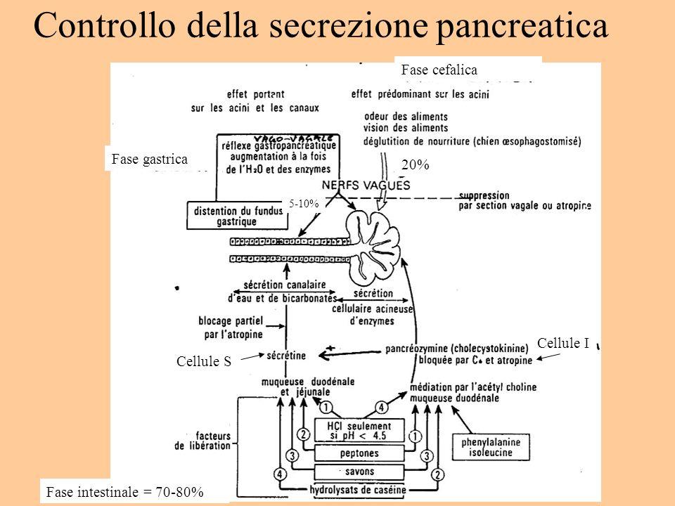 Controllo della secrezione pancreatica