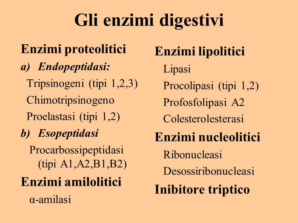 Gli enzimi digestivi Enzimi proteolitici Enzimi lipolitici