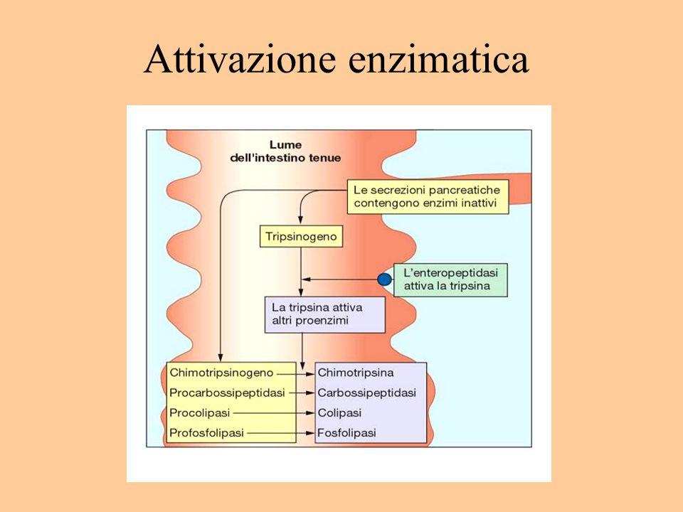 Attivazione enzimatica