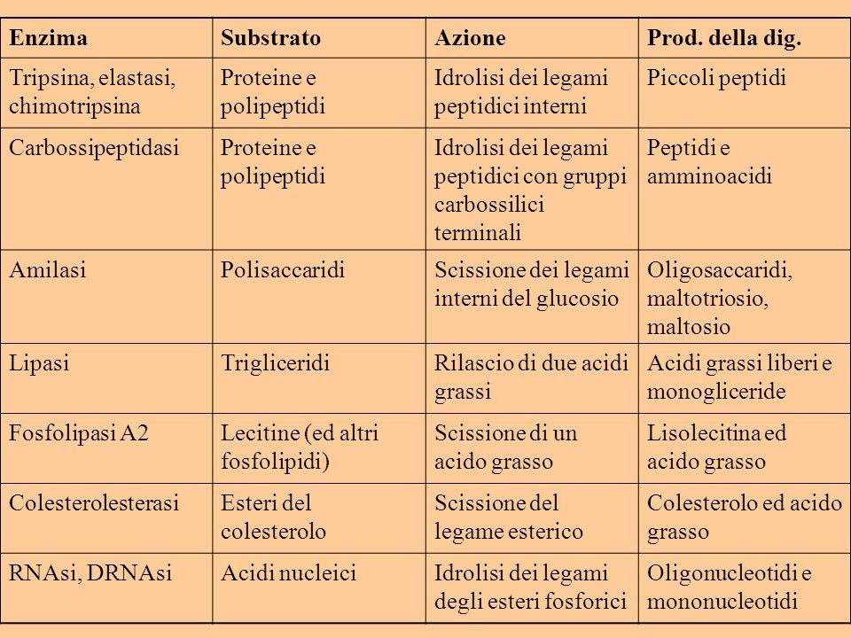 Enzima Substrato. Azione. Prod. della dig. Tripsina, elastasi, chimotripsina. Proteine e polipeptidi.