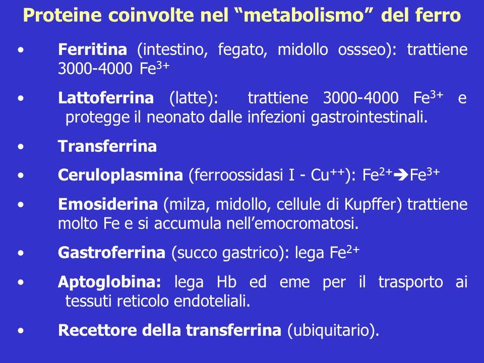 Proteine coinvolte nel metabolismo del ferro