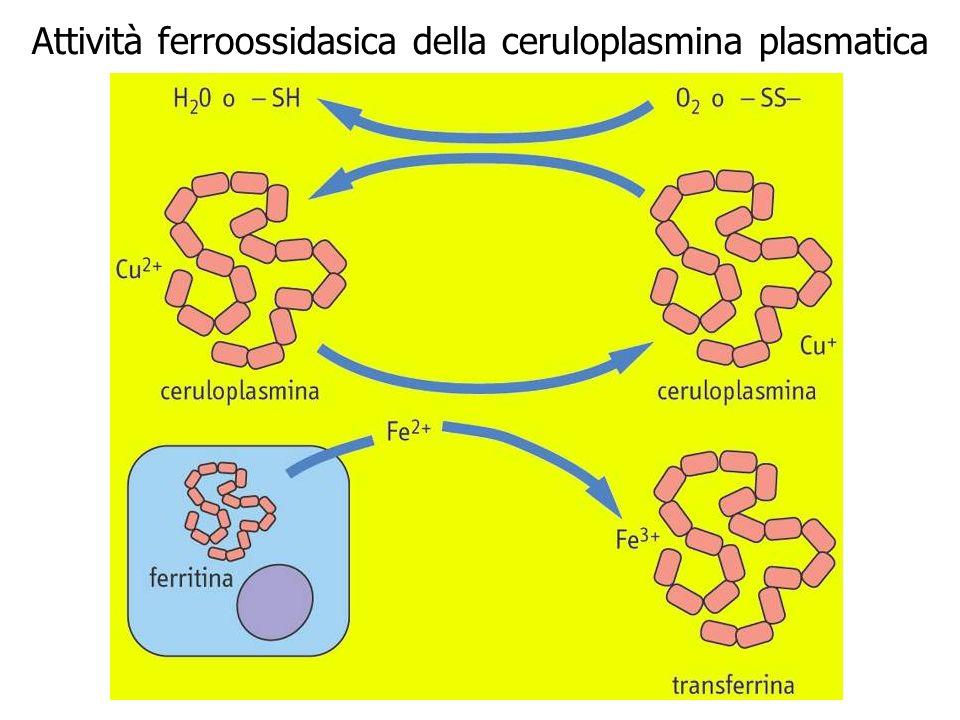 Attività ferroossidasica della ceruloplasmina plasmatica