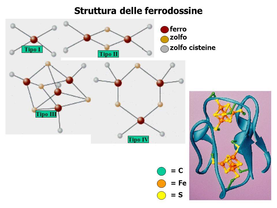 Struttura delle ferrodossine