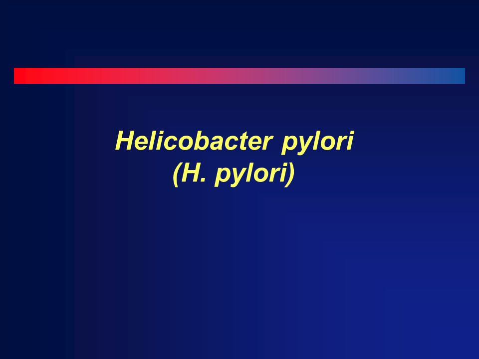 Helicobacter pylori (H. pylori)