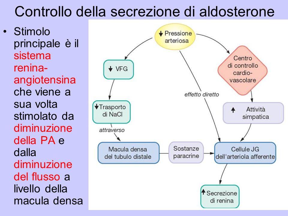 Controllo della secrezione di aldosterone
