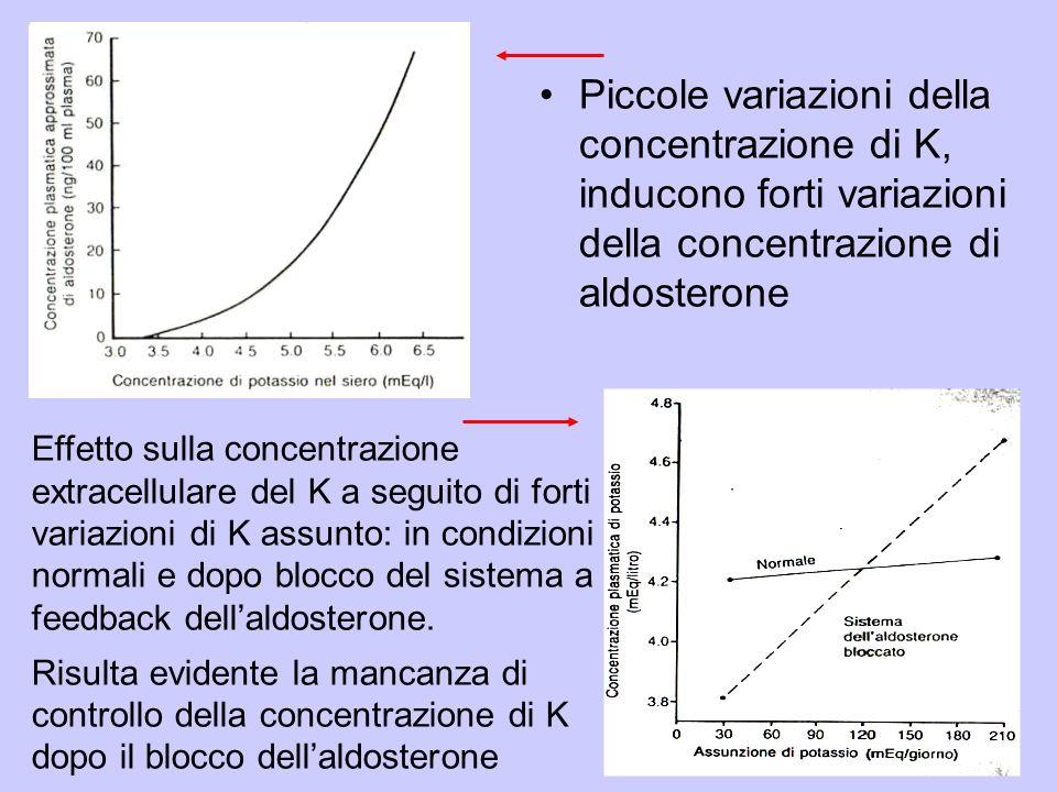 Piccole variazioni della concentrazione di K, inducono forti variazioni della concentrazione di aldosterone