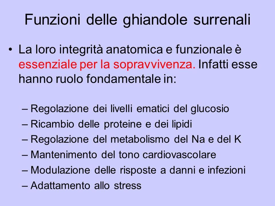 Funzioni delle ghiandole surrenali
