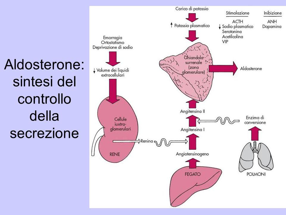 Aldosterone: sintesi del controllo della secrezione