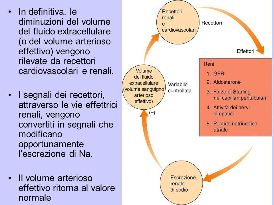 In definitiva, le diminuzioni del volume del fluido extracellulare (o del volume arterioso effettivo) vengono rilevate da recettori cardiovascolari e renali.