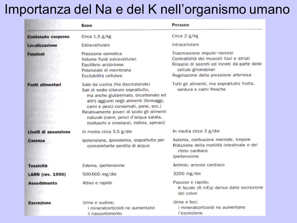 Importanza del Na e del K nell'organismo umano