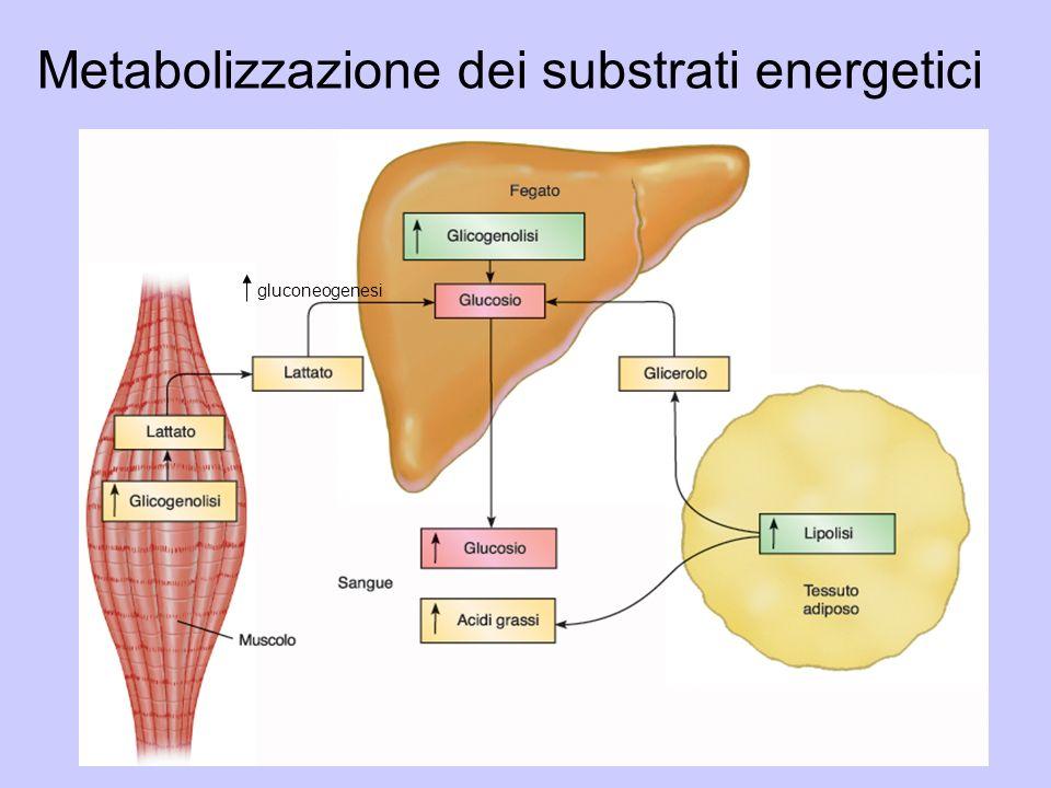 Metabolizzazione dei substrati energetici