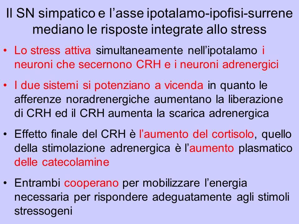 Il SN simpatico e l'asse ipotalamo-ipofisi-surrene mediano le risposte integrate allo stress