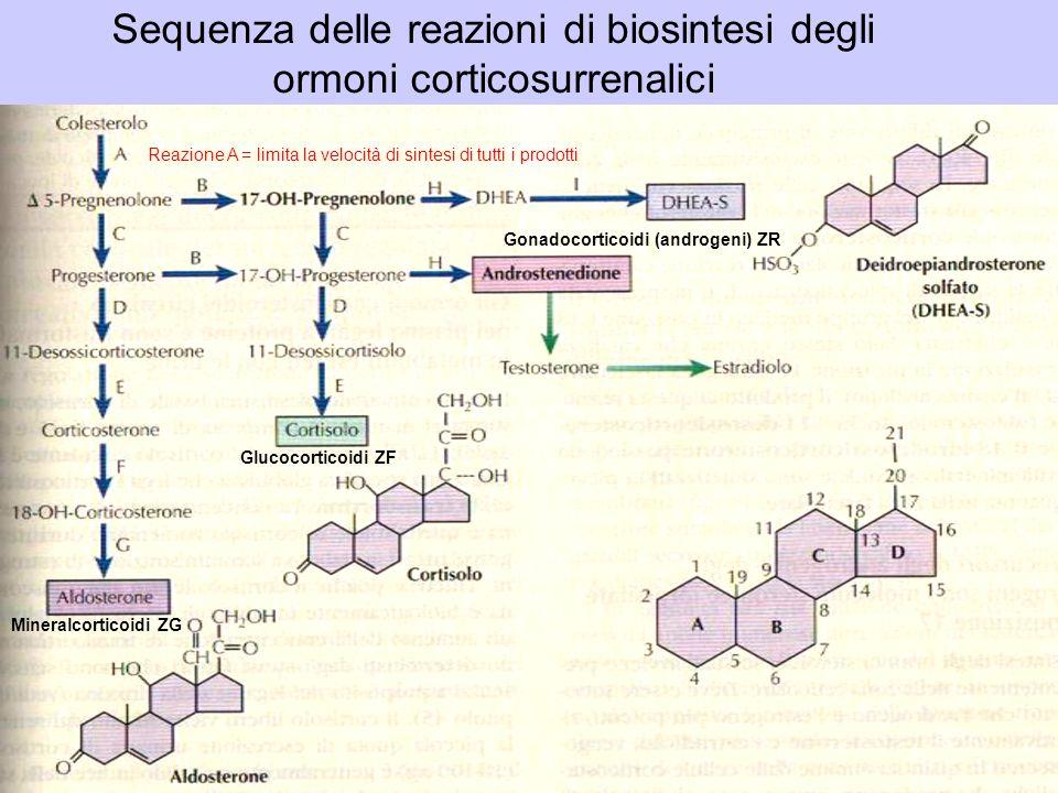 Sequenza delle reazioni di biosintesi degli ormoni corticosurrenalici