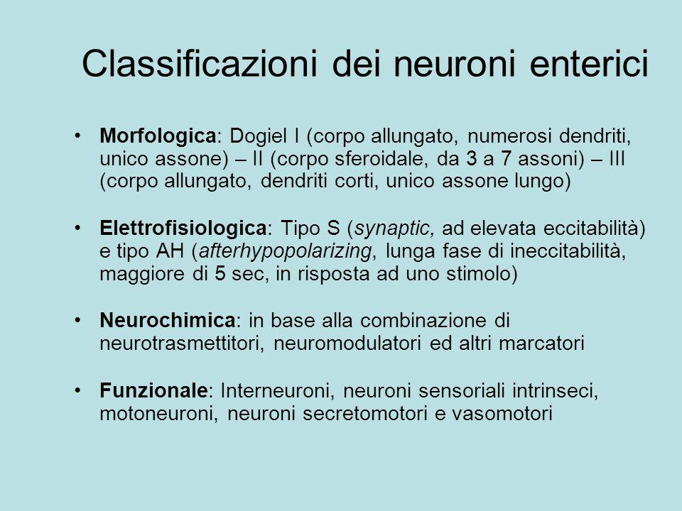 Classificazioni dei neuroni enterici