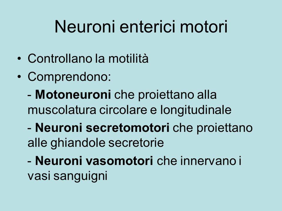 Neuroni enterici motori