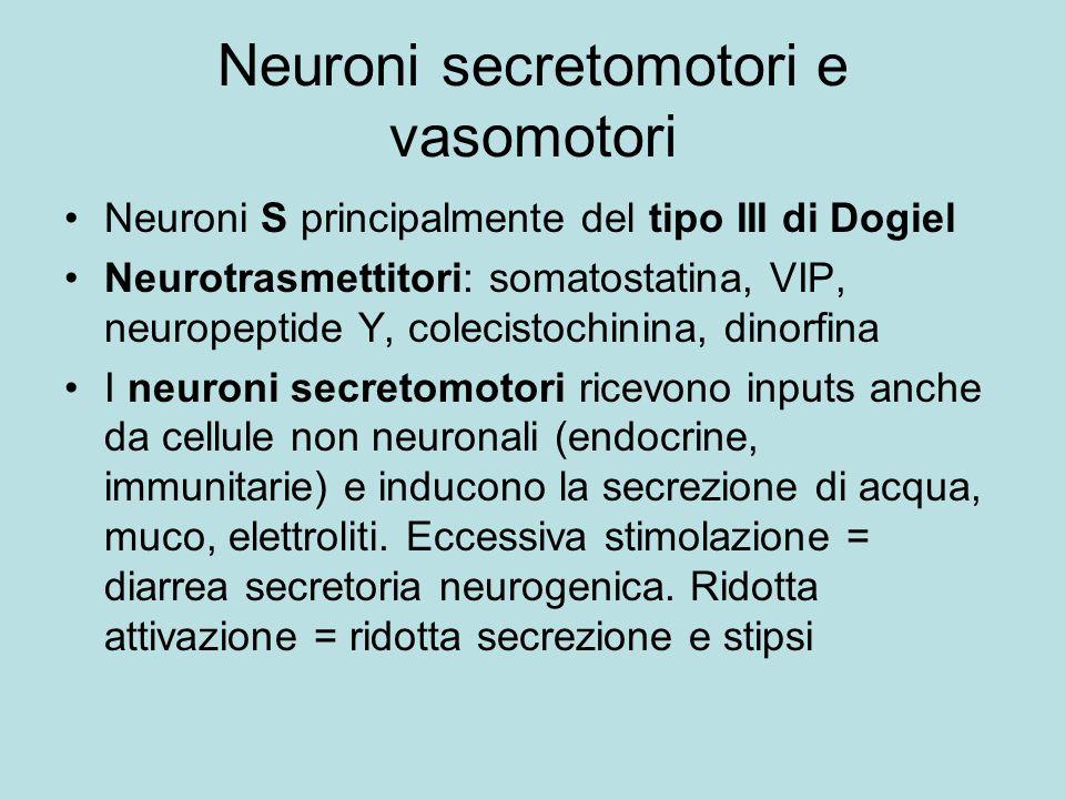 Neuroni secretomotori e vasomotori