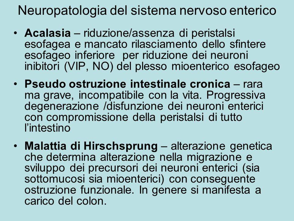 Neuropatologia del sistema nervoso enterico