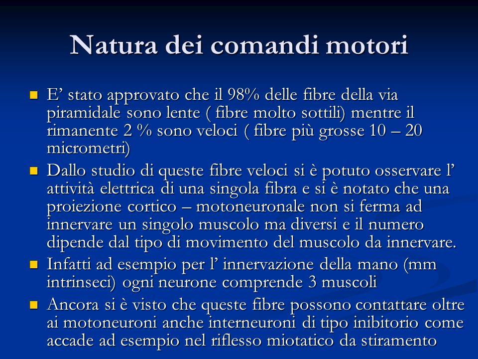 Natura dei comandi motori