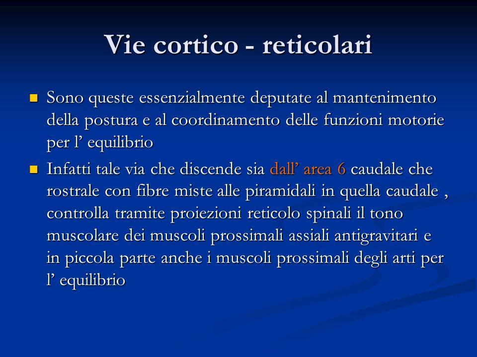 Vie cortico - reticolari