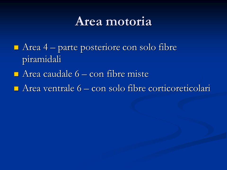 Area motoria Area 4 – parte posteriore con solo fibre piramidali