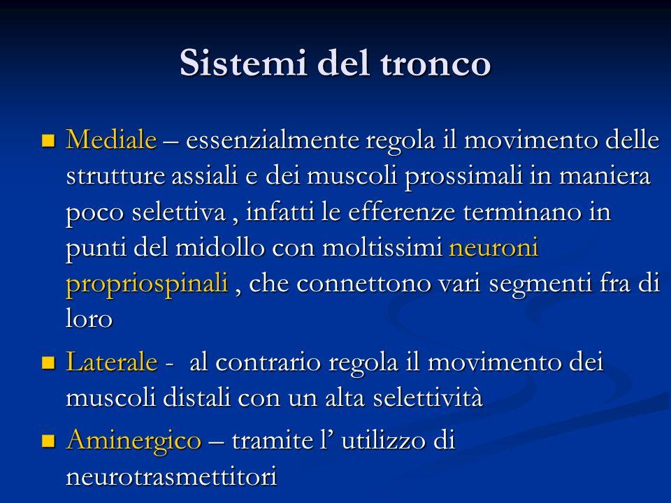 Sistemi del tronco