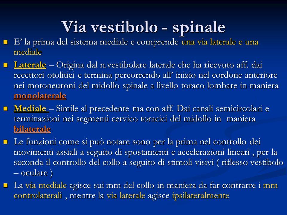 Via vestibolo - spinale