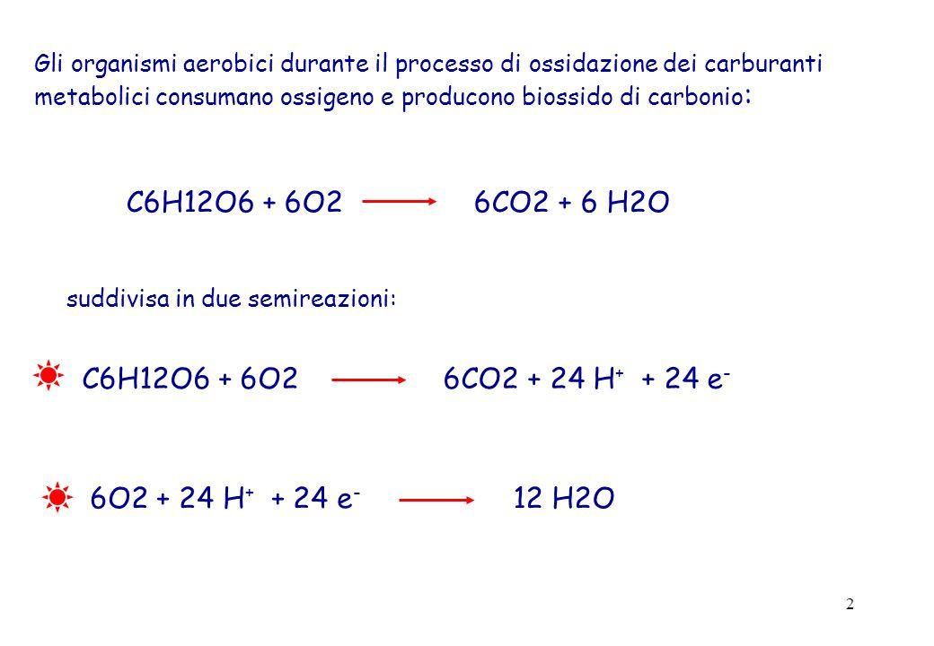 C6H12O6 + 6O2 6CO2 + 6 H2O C6H12O6 + 6O2 6CO2 + 24 H+ + 24 e-