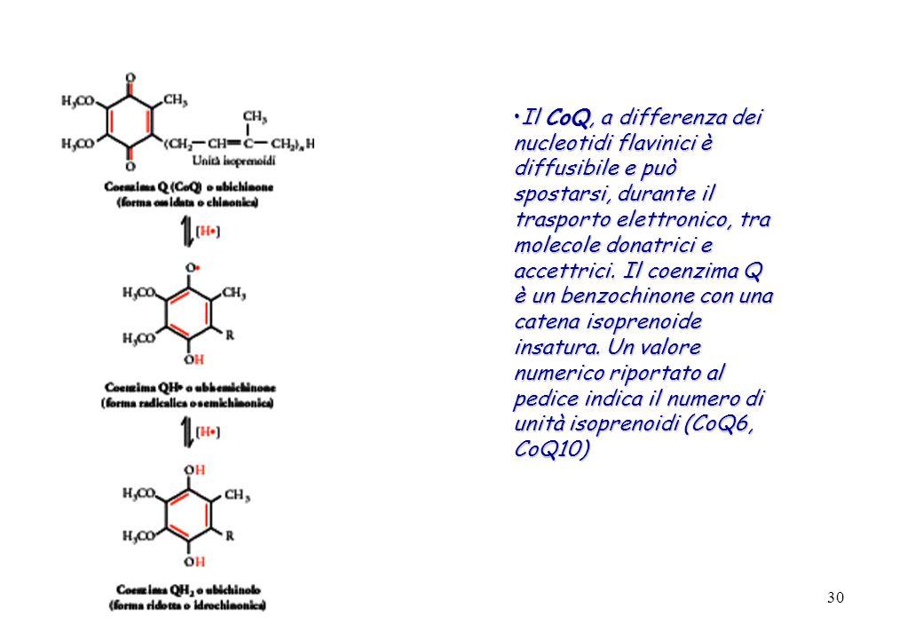 Il CoQ, a differenza dei nucleotidi flavinici è diffusibile e può spostarsi, durante il trasporto elettronico, tra molecole donatrici e accettrici.