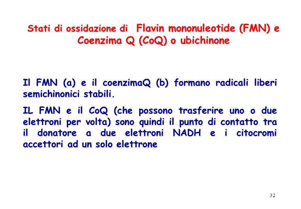 Stati di ossidazione di Flavin mononuleotide (FMN) e Coenzima Q (CoQ) o ubichinone