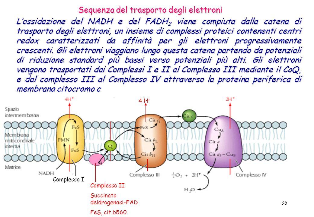 Sequenza del trasporto degli elettroni