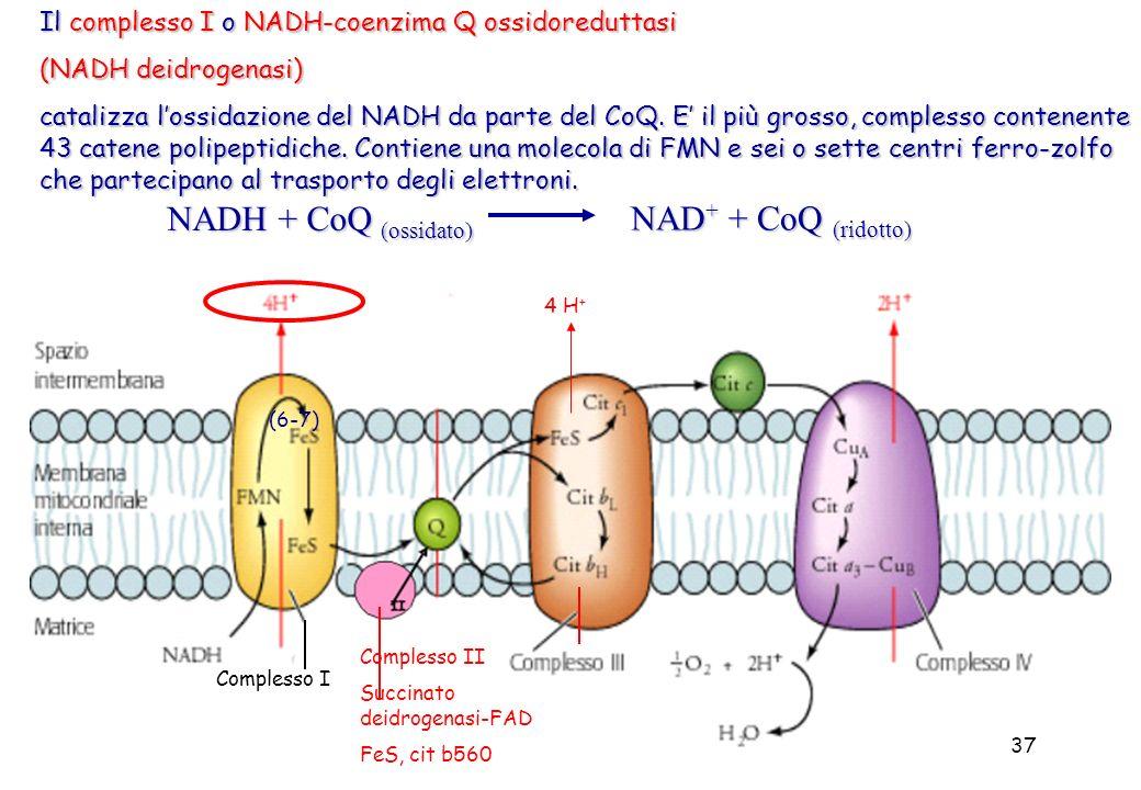 NADH + CoQ (ossidato) NAD+ + CoQ (ridotto)