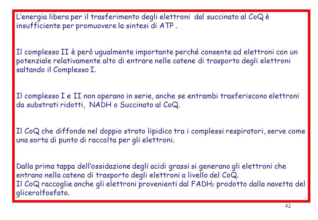 L'energia libera per il trasferimento degli elettroni dal succinato al CoQ è insufficiente per promuovere la sintesi di ATP .