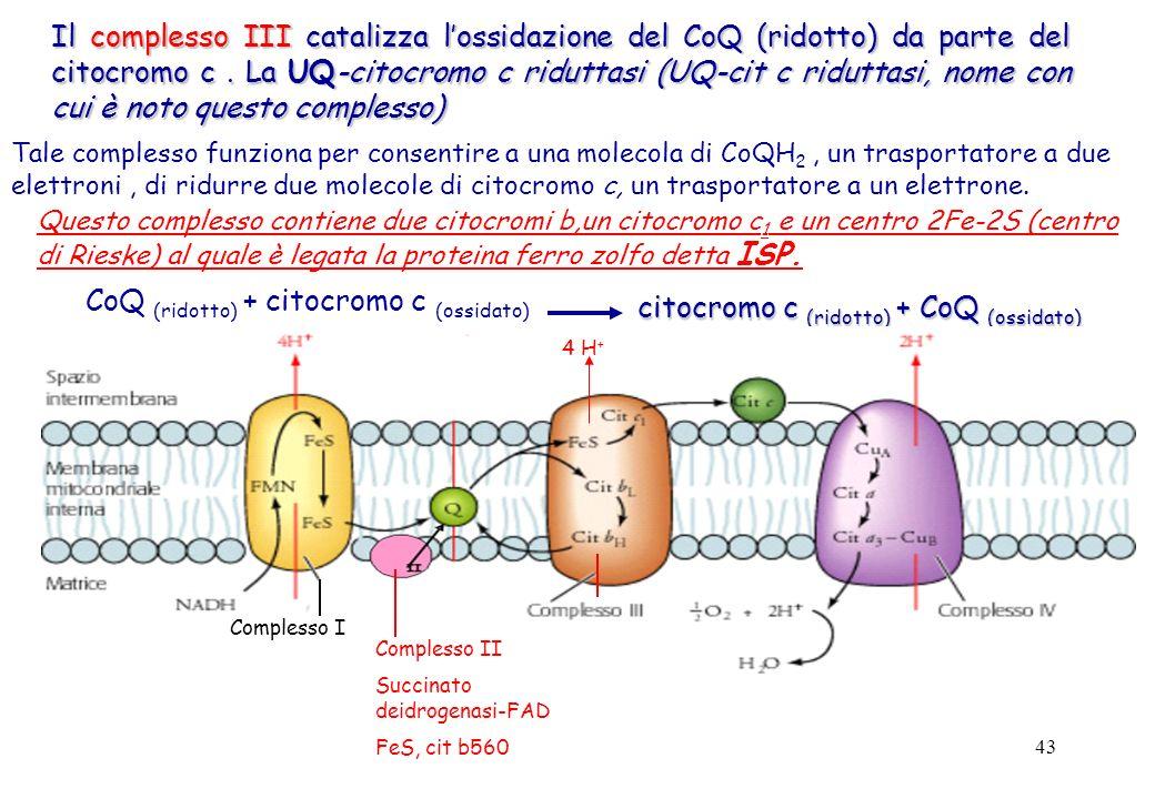 CoQ (ridotto) + citocromo c (ossidato)