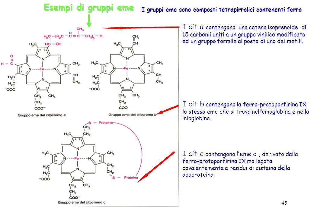 Esempi di gruppi eme I gruppi eme sono composti tetrapirrolici contenenti ferro.