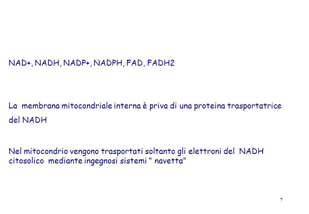 NAD+, NADH, NADP+, NADPH, FAD, FADH2