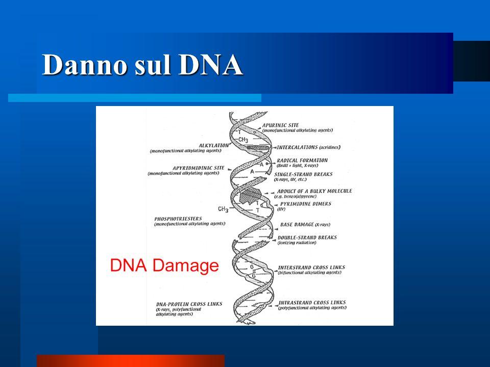 Danno sul DNA