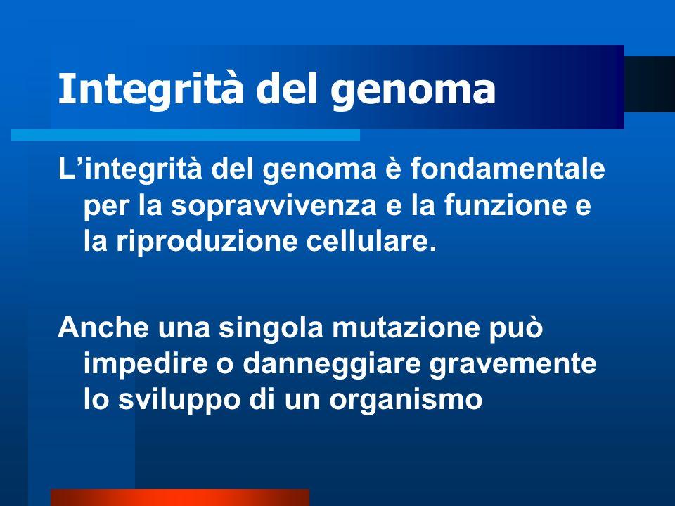 Integrità del genoma L'integrità del genoma è fondamentale per la sopravvivenza e la funzione e la riproduzione cellulare.