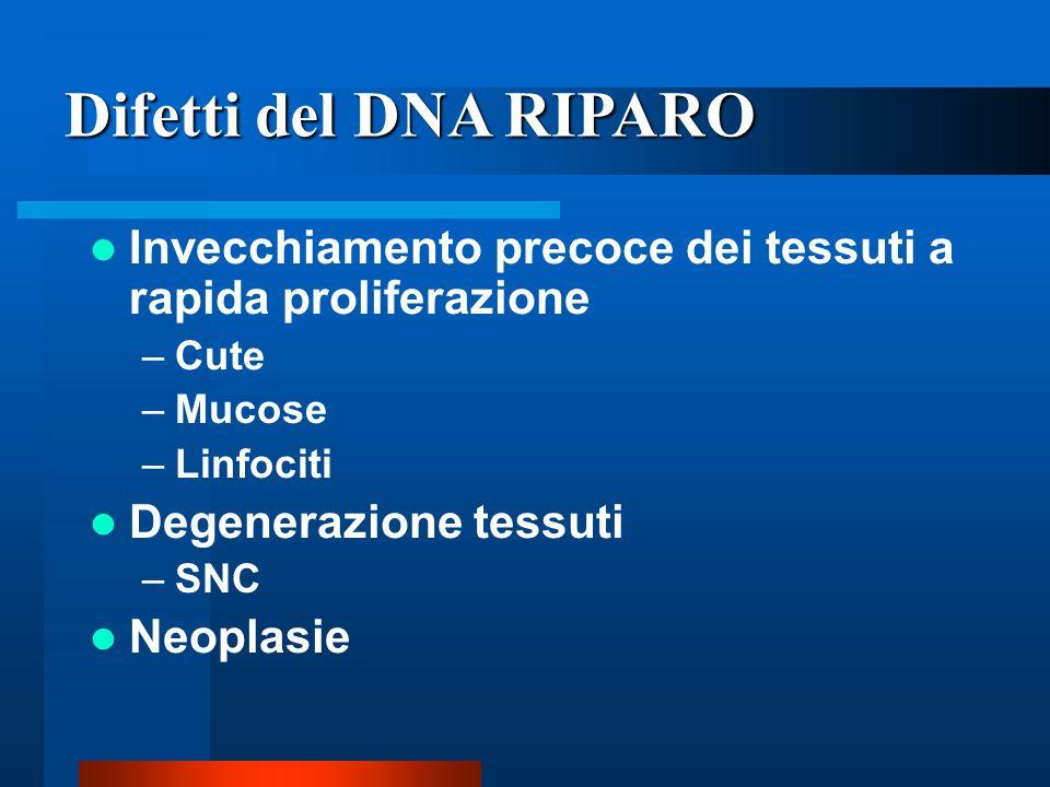 Difetti del DNA RIPARO Invecchiamento precoce dei tessuti a rapida proliferazione. Cute. Mucose. Linfociti.